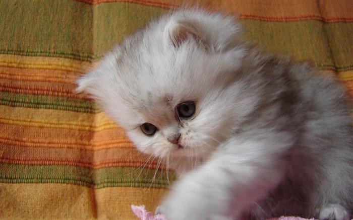 Котята фото красивые пушистые милашки смешные