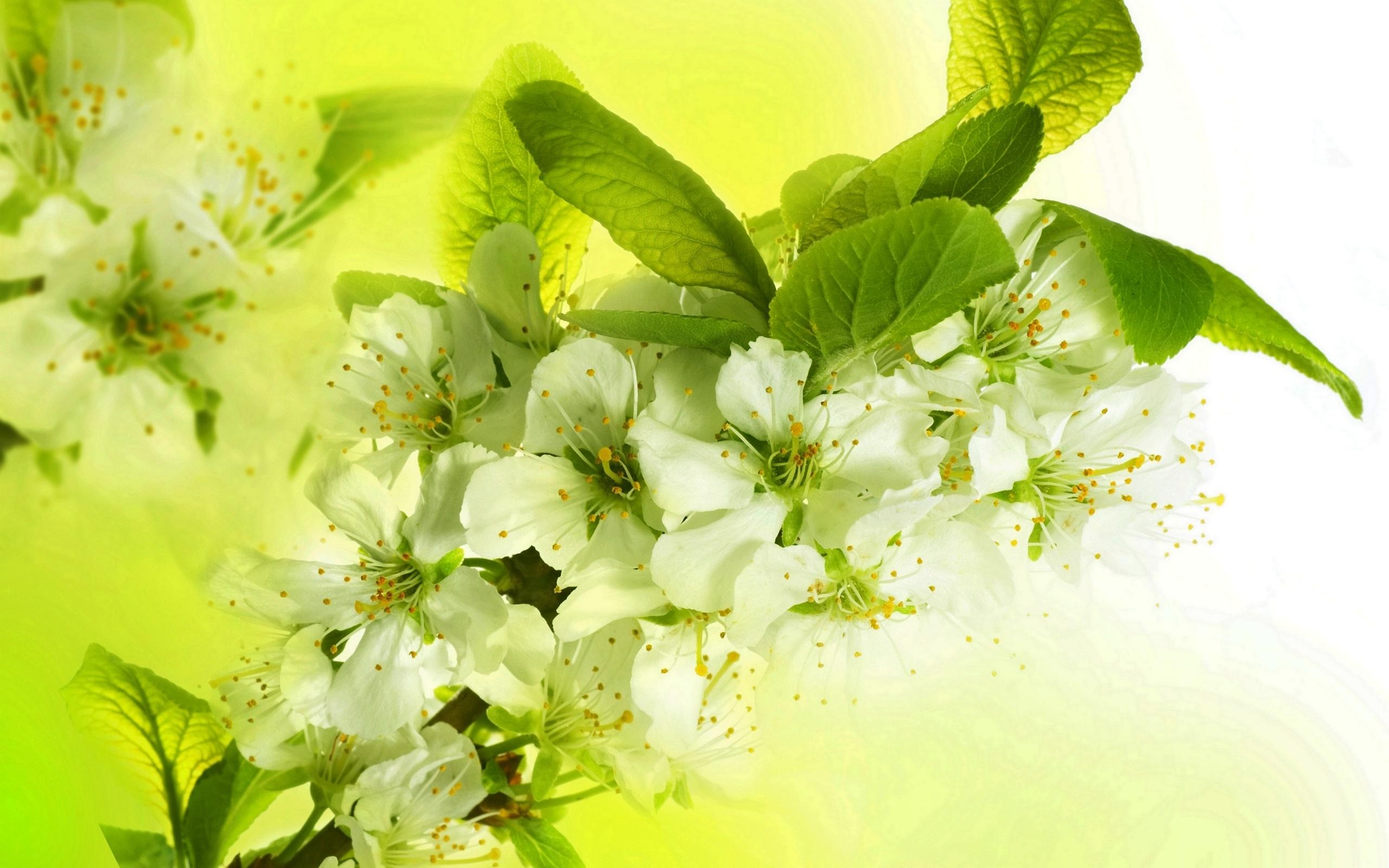 яблони в цвету обои на стол № 217651 загрузить